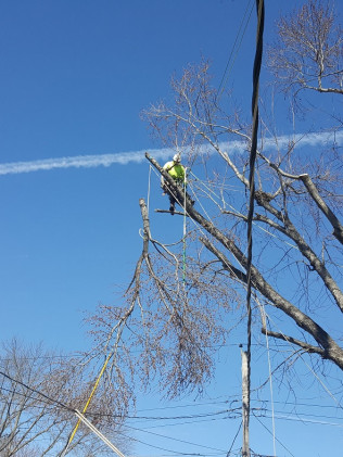 Trimming Branches Over Power Lines
